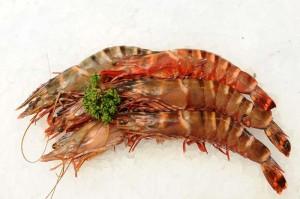 king-prawn---tiger-prawn-89