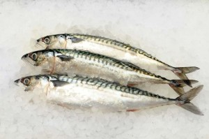 mackerel-60
