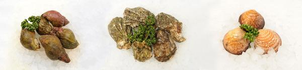 shellfish-posh